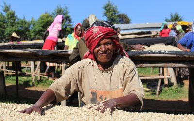 Kayon Mountain: from bushland to the face of future Ethiopian coffee